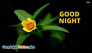 Good Night Images New Flowers - Best Flowers and Rose 2017