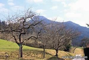 Bäume Schneiden Wann : wann soll man die baeume schneiden ~ Lizthompson.info Haus und Dekorationen