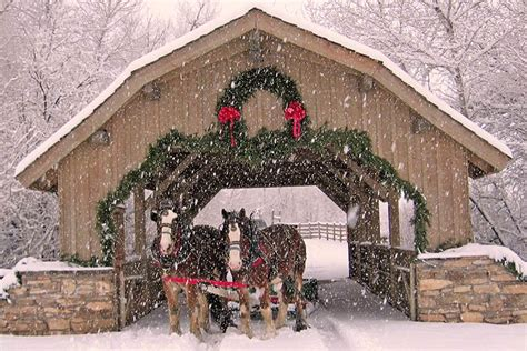 covered bridge ranch christmas trees   covered