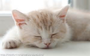sleeping cat and pictures of animals kittens 3