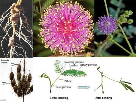 soil moisture retention  native pollinators