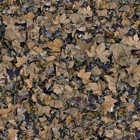 Browsing Seamless Leaves Category Good Textures