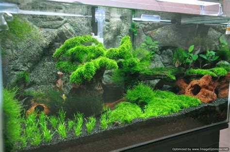 moos für aquarium my moss tank aquaticquotient photo gallery