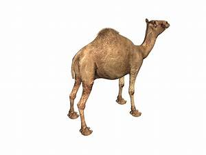 Indian Camel 3d Model 3ds Max Files Free Download
