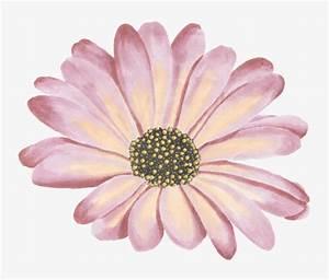 Pink single flower, Flowers, Watercolor Flowers, Single ...