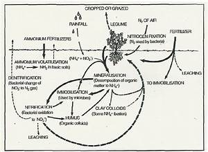 The Nitrogen Cycle  Showing The Inputs  Transformation And