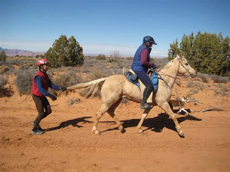 horse endurance horses tailing teaching flight fight way riding easy trail equestrian easycareinc training tips hoof teach works clip boots