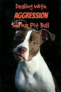 pitbull puppy training tips dealing with aggression With aggressive dog training tips