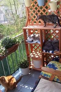 1000 images about katzenuniversum auf pinterest With balkon ideen katze