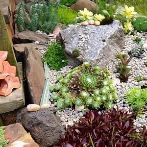 Steinbeet Pflanzen Winterhart : pflanzen f r steingarten sukkulenten hauswurzen arten ~ Watch28wear.com Haus und Dekorationen