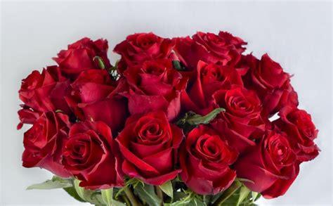 gorgeous kenyan red roses  optimal connection