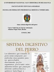 Sistema, Digestivo, Del, Perro