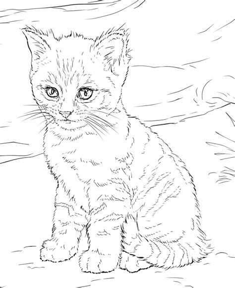 cat coloring pages  adults wzory  welny