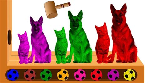 Learn Colors With Funny Cats Vs Dogs Animals Xylophone