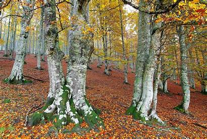 Seasons Autumn Nature Trees Foliage Wallpapers13 Forest