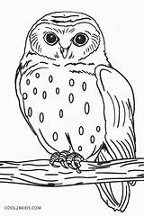 Owl Coloring Pages Colouring Printable Owls Snowy Birds Cool2bkids Bird Sheets Animal Easy Printables Adult Trending Days Last Jurnalistikonline sketch template