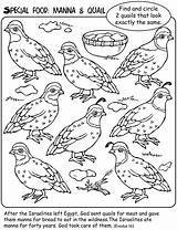 Manna Quail Moses Bible Sunday Wilderness Coloring Crafts Preschool Activities Lessons Welcome Dover Publications Class Quails Church Stories Template Heaven sketch template