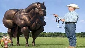 Combien De Chevaux : les 12 races de chevaux les plus incroyables du monde lama fach youtube ~ Medecine-chirurgie-esthetiques.com Avis de Voitures