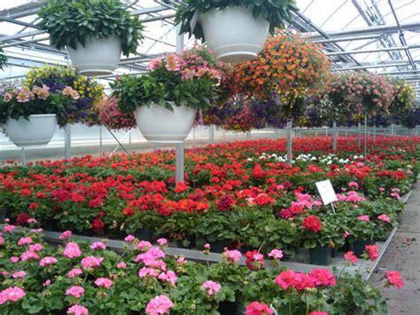 spring flowers greenhouse   stock photo public