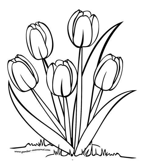 mewarnai bunga tulip