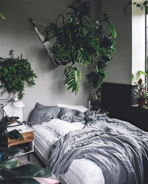 Plants In Bedroom by 19 Stunning Plants That Will Make You Feel Things Plants