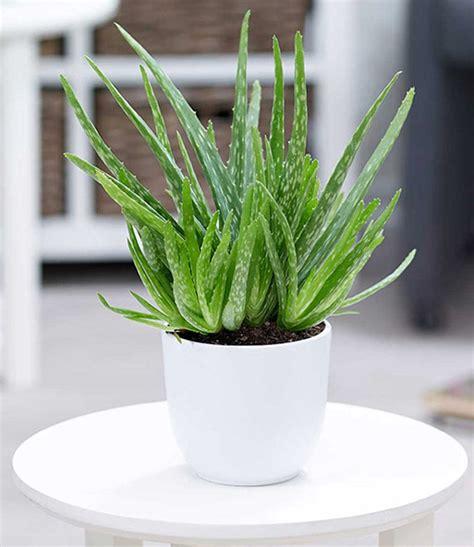 zimmerpflanzen mix pflegeleicht 1a zimmerpflanzen kaufen baldur garten