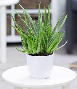 Büro Pflanzen Pflegeleicht : zimmerpflanzen mix 39 pflegeleicht 39 1a zimmerpflanzen online kaufen baldur garten ~ Michelbontemps.com Haus und Dekorationen