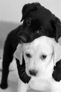 cute black and white puppies | Animal Love | Pinterest ...