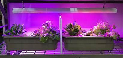 Lights Growing Indoor Grow Planters Both Led