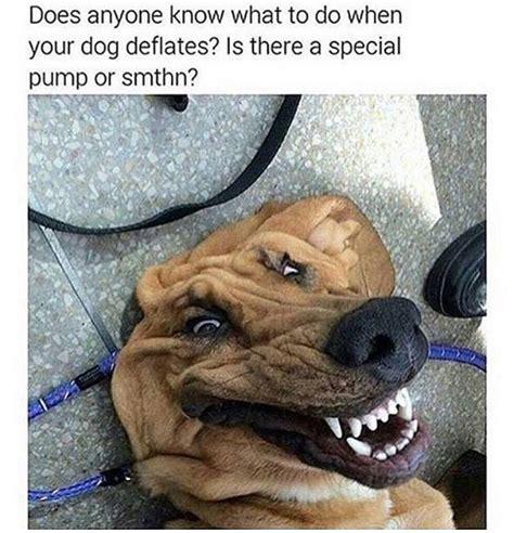 doggo memes     joyscribe