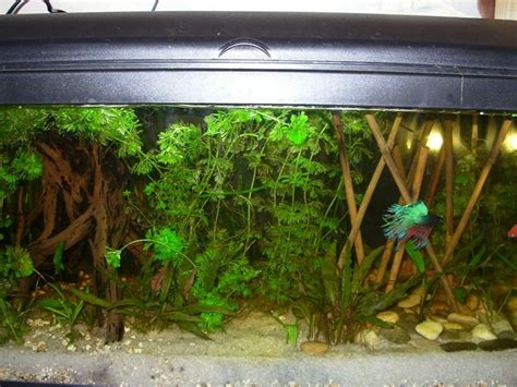 decoration aquarium eau douce id 233 es de d 233 coration et de
