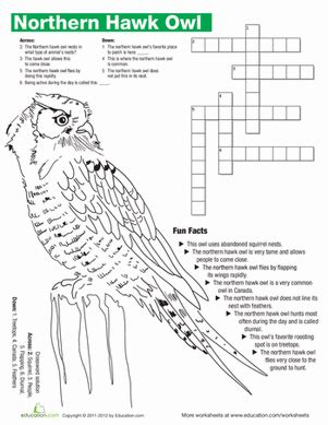 northern hawk owl facts worksheet education
