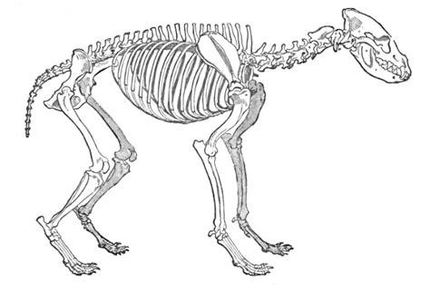de quoi cest la charpente le squelette le crane