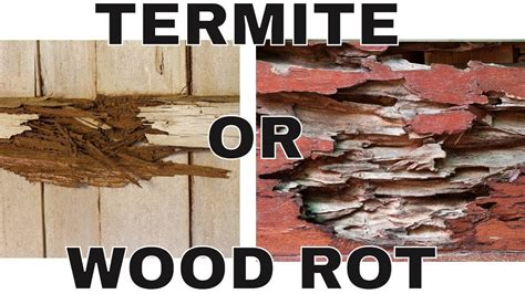 termite damage wood rot damage