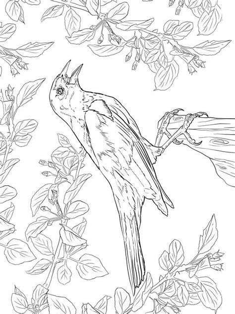blackbird coloring pages   print blackbird