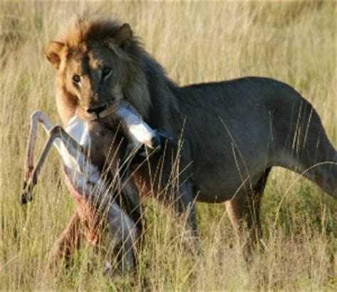 Looking for interesting African animals facts?
