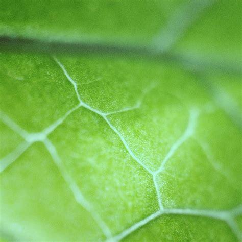 nl leaf zoom green nature bokeh wallpaper