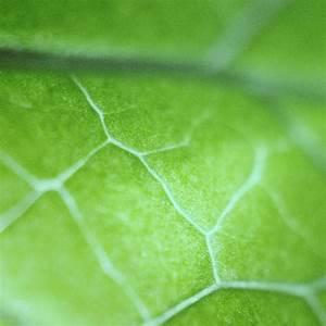 nl26-leaf-zoom-green-nature-bokeh-wallpaper