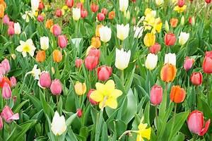 Bilder Blumen Kostenlos Downloaden : blumenwiese und blumen lizenzfreie fotos bilder kostenlos herunterladen ohne anmeldung ~ Frokenaadalensverden.com Haus und Dekorationen