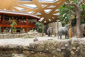 Thaiabend Zoo Zrich