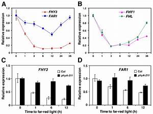 . Down-regulation of FHY3 , FAR1 , FHY1 and FHL by phyA ...