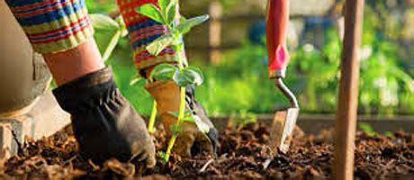 Feeders Supply Company by Lawn Garden Products Garden Supplies Seeds Dallas Tx