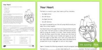 your heart worksheet worksheet science biology heart