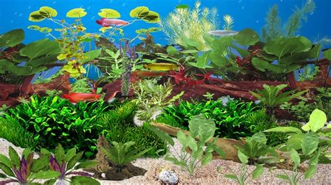 Free Animated Aquarium Desktop Wallpaper For Windows 7 - animated aquarium wallpaper for windows 7 free