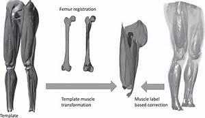 32 Leg Muscle Label