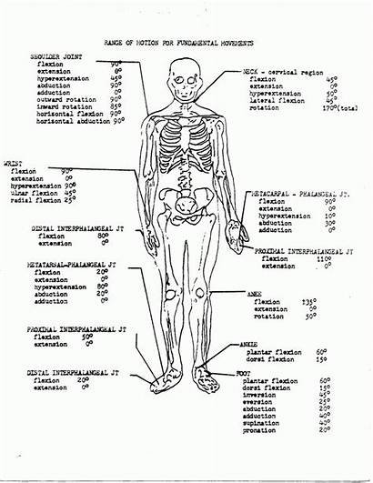 Anatomy Coloring Physiology Printable Pages Workbook Human