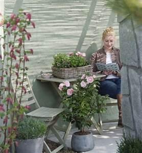 Schimmel Auf Blumenerde : blumenerde schimmelt was tun planungswelten ~ Watch28wear.com Haus und Dekorationen