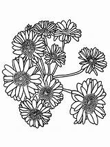 Coloring Printable Pages Sunflowers Sunflower Sheet Onlinecoloringpages Sheets Clip sketch template