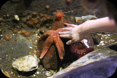 sea stars   national sealife centre birmingham