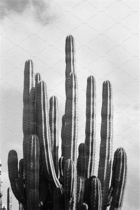 cactus black  white photography nature